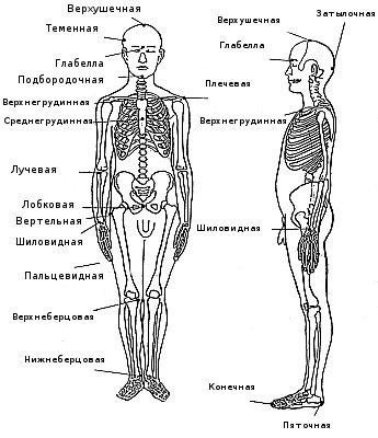 отдельных частей тела: